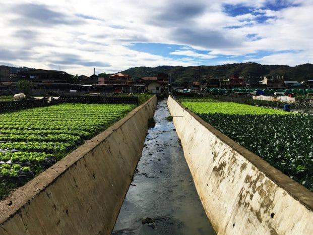 Farm Irrigation in La Trinidad Strawberry Farm