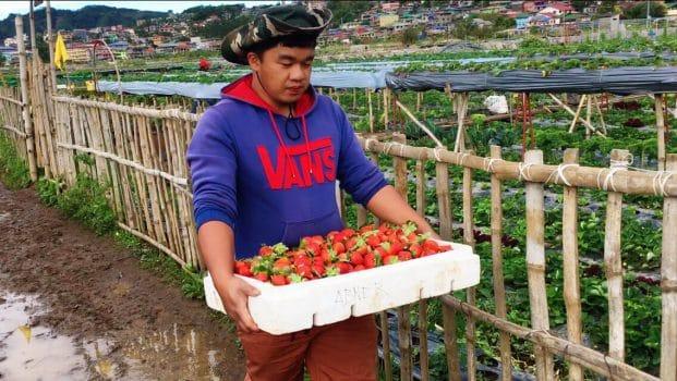 Photo of a Farmer in La Trinidad