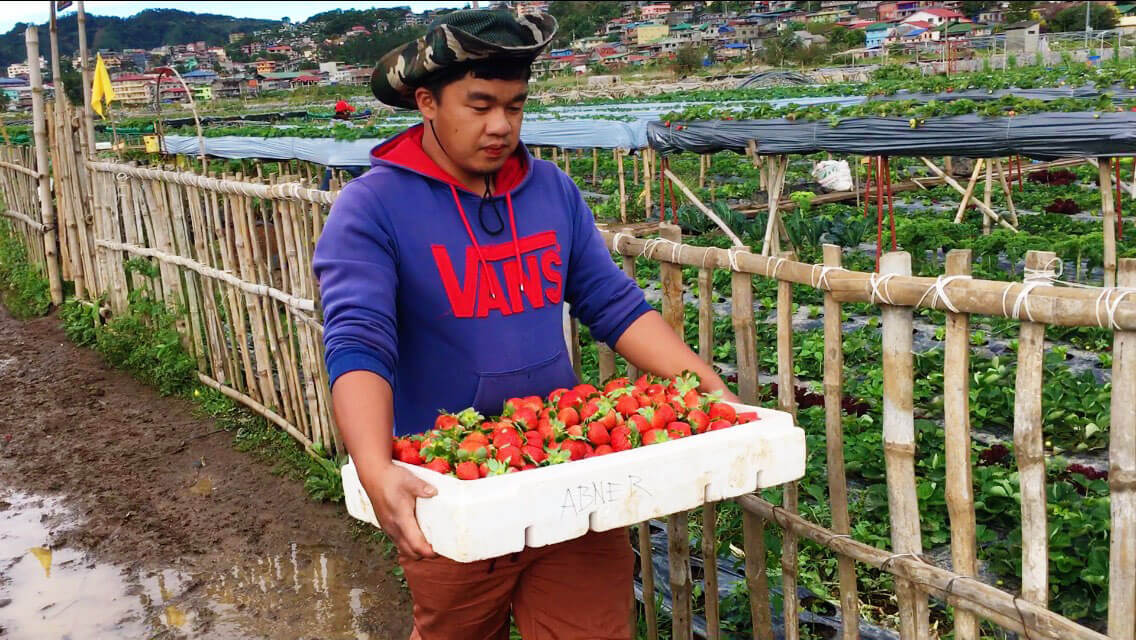 Photo of a Farmer in La Trinidad