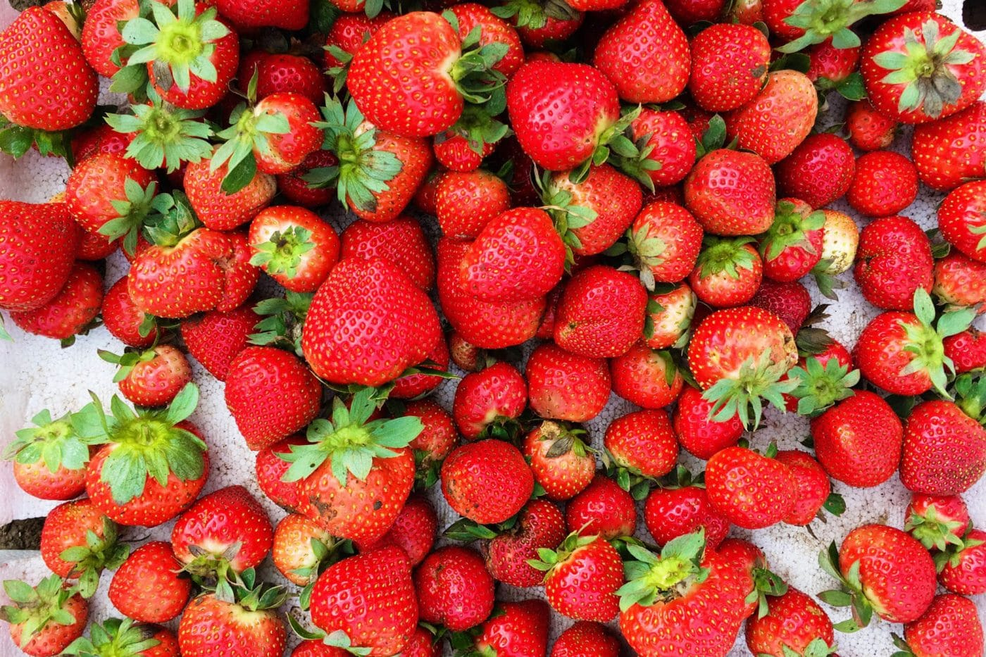 Photo of Strawberries in La Trinidad Strawberry Farm
