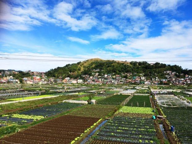 Photo of La Trinidad Strawberry Farm Baguio