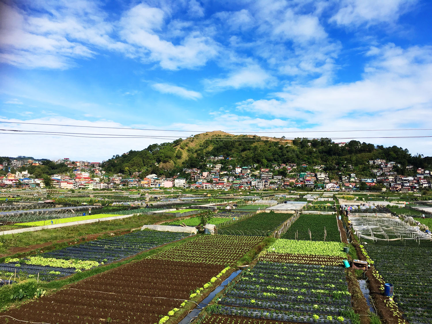 Photo of La Trinidad Strawberry Farm Baguio
