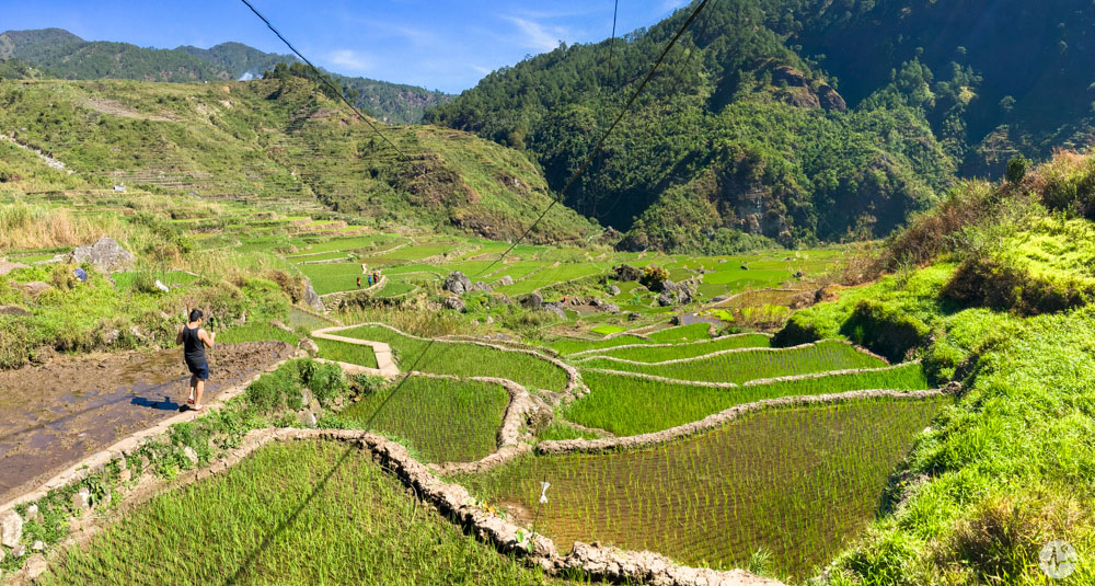 Picture of Fidelisan Rice Terraces