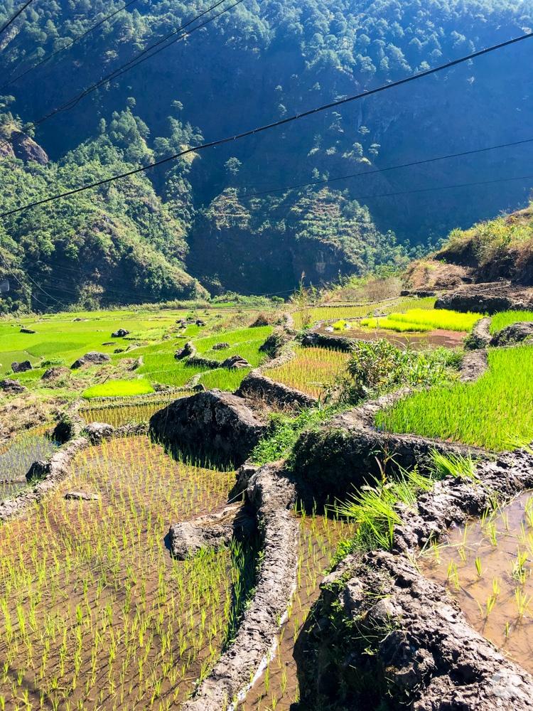 Picture of Fidelisan Rice Terraces in Sagada