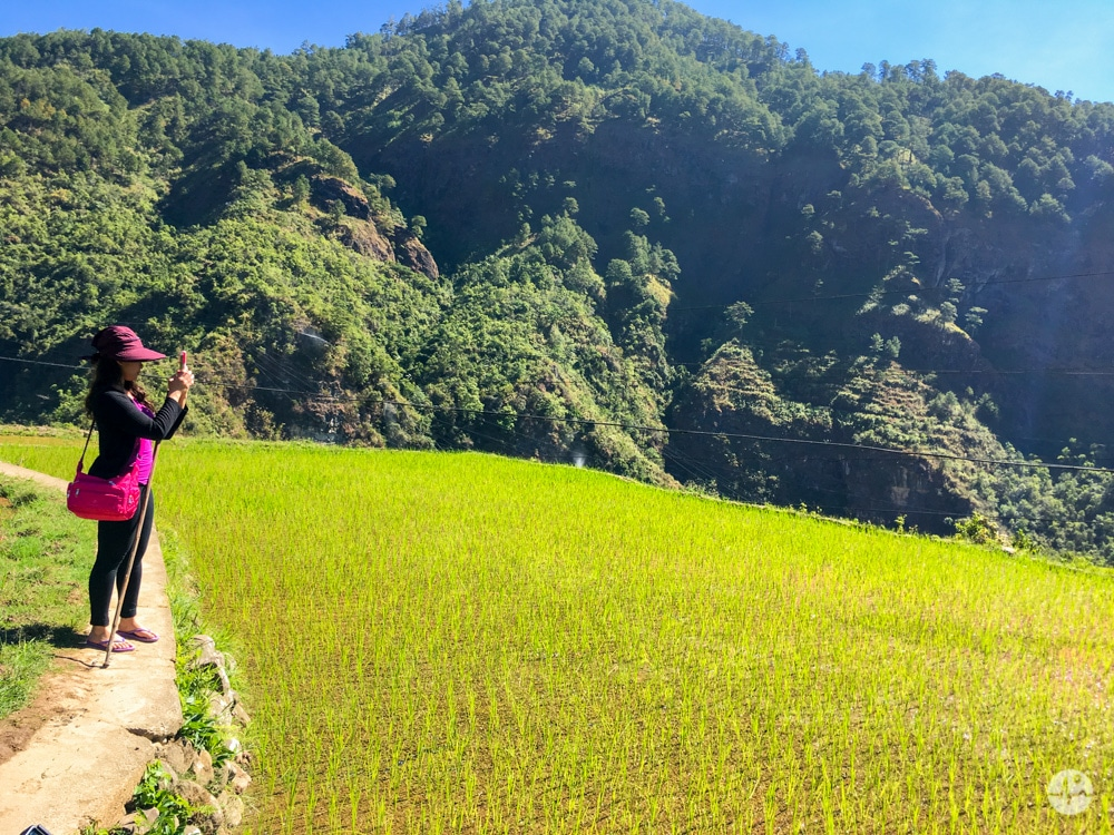 Picture of rice fields in Fidelisan Sagada