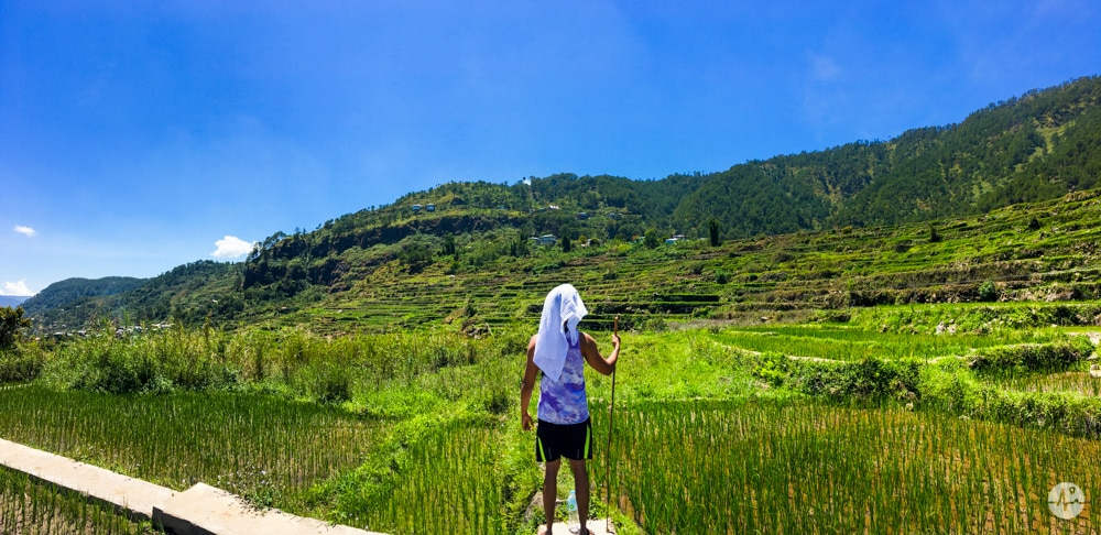 Picture of rice fields in Pide Sagada