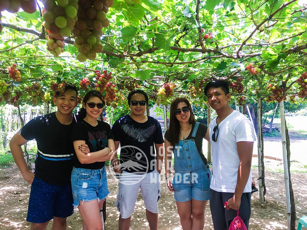 Picture of tourists in a grape farm La Union
